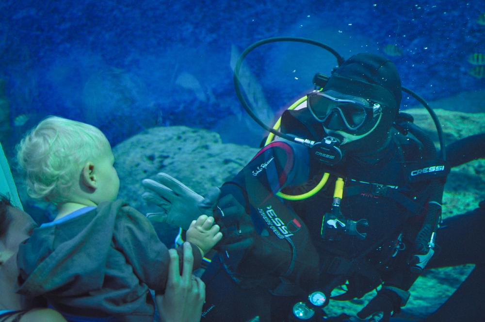 11a_oceanarium_Singapur
