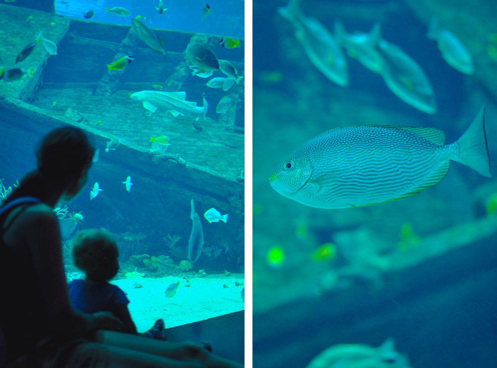 4_oceanarium_singapur