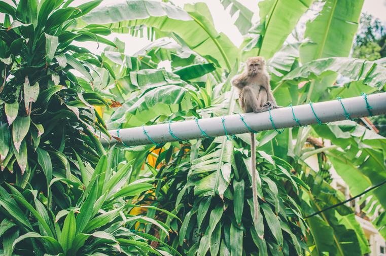 4a-Malezja-wyspa Pangkor-z dzieckiem