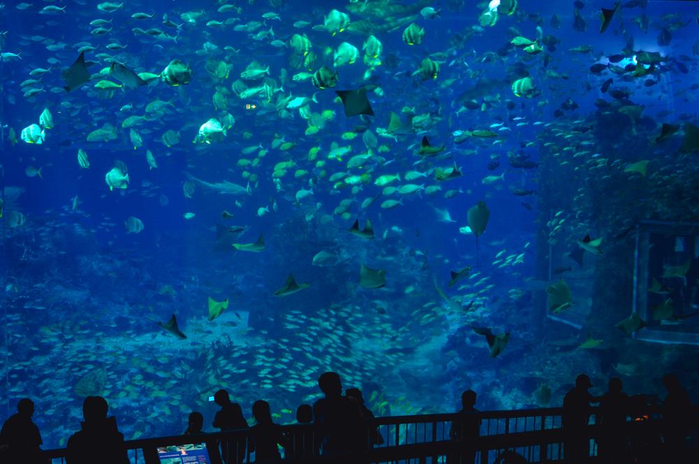 5a_oceanarium_Sinapur
