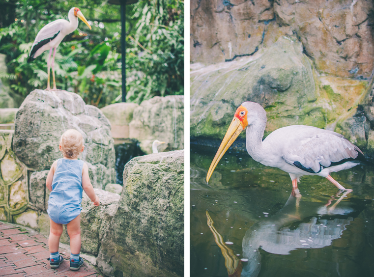 03.Kuala Lumpur Bird Park-Malezja-z dzieckiem