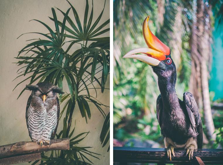 08.Kuala Lumpur Bird Park-Malezja-z dzieckiem