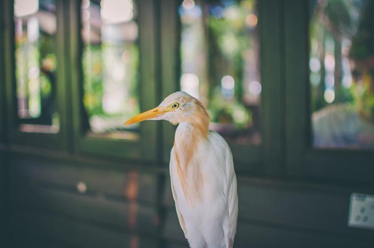 09.Kuala Lumpur Bird Park-Malezja-z dzieckiem