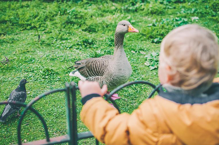 04.Parki w Londynie - Anglia z dzieckiem.