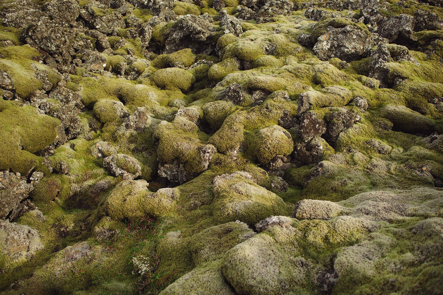 06.Pola lawy - Polwysep Snaefellsnes -Islandia - podroz z dzieckiem