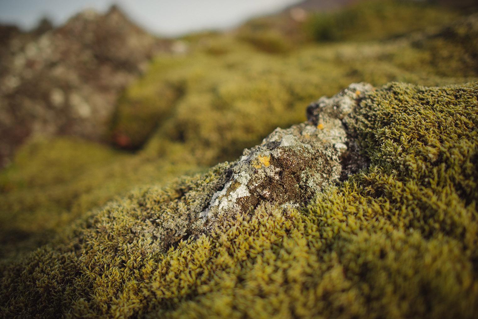 09.Pola lawy - Polwysep Snaefellsnes -Islandia - podroz z dzieckiem