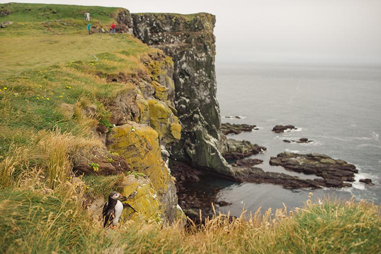 09.Maskonury Islandia - Latrabjarg - fiordy zachodnie - podroz z dzieckiem