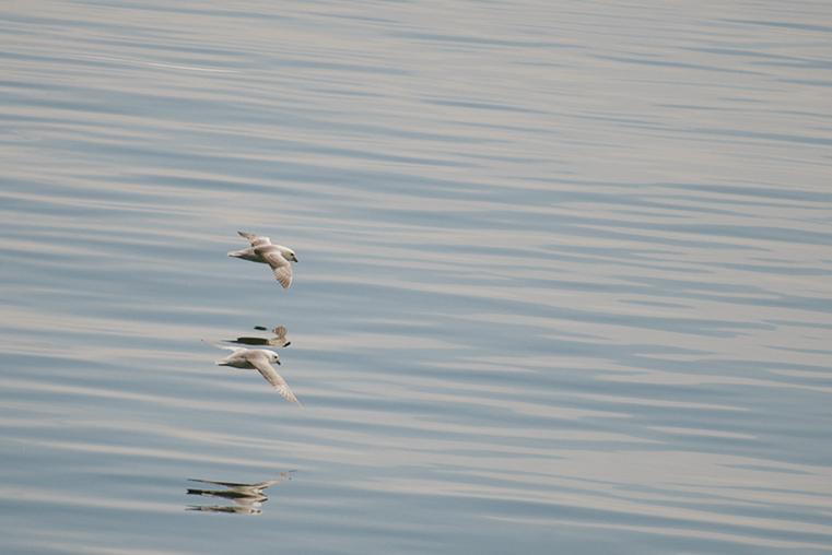 12.Baldur - prom na Fiordy Zachodnie - Islandia - podroz z dzieckiem