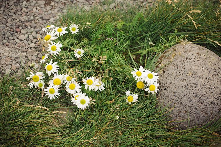12.Maskonury Islandia - Latrabjarg - fiordy zachodnie - podroz z dzieckiem