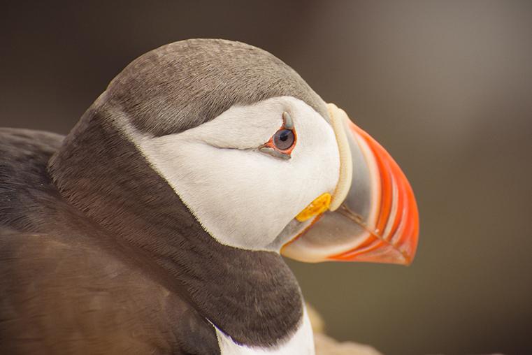 14.Maskonury Islandia - Latrabjarg - fiordy zachodnie - podroz z dzieckiem