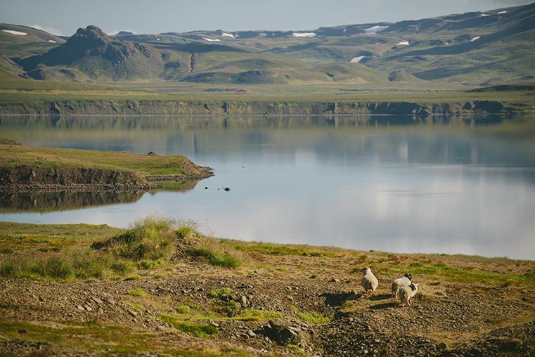 18.Fiordy Zachodnie - Islandia - podroz z dzieckiem