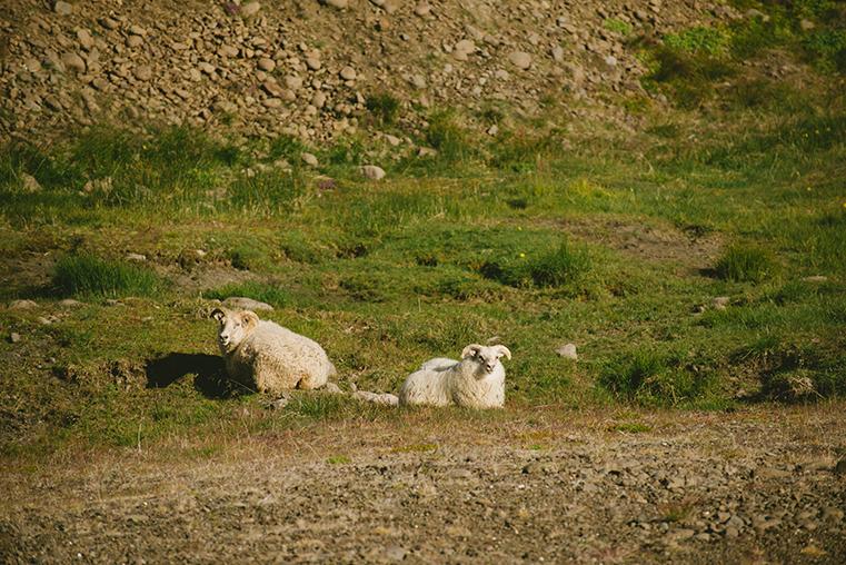 20.Fiordy Zachodnie - Islandia - podroz z dzieckiem