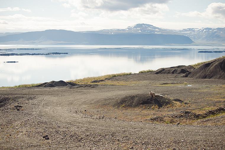 22.Fiordy Zachodnie - Islandia - podroz z dzieckiem